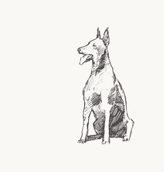 doberman pinscher draw dog realistic sketch vector image