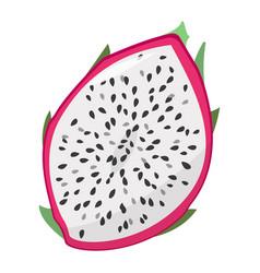 Dragon fruit half cut fruit isolated vector