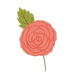 Isolated roses decoration design vector
