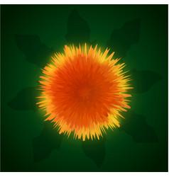 sunny orange dandelion vector image