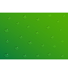 Water drops on green background vector image