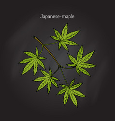 Japanese-maple tree branch vector