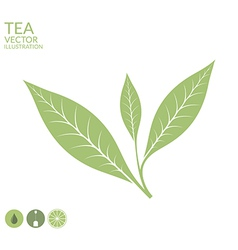 Tea leaf Isolated on white background vector image vector image