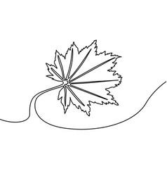 continuous line autumn maple leaf vector image