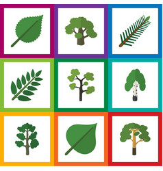 Flat icon ecology set of tree spruce leaves vector