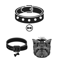 isolated object of pet and accessories symbol vector image