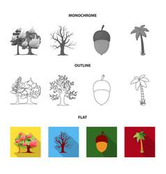 Burning tree palm acorn dry treeforest set vector