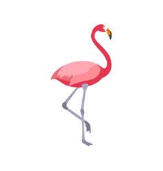 Flat flamingo on white background vector