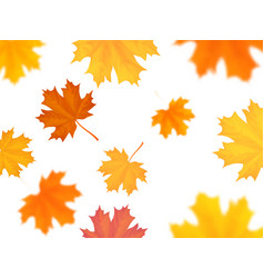 Flying maple leaves on white background vector