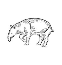 Tapir animal sketch engraving vector