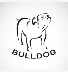 bull dog design on white background pet animal vector image
