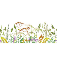 seamless border with autumn wild plants vector image
