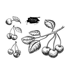 cherry drawing set isolated hand drawn vector image