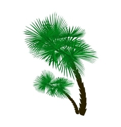 Two green palm trees at an angle isolated on white vector