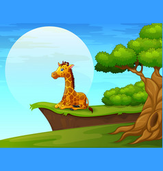cartoon giraffe sitting near the cliff vector image