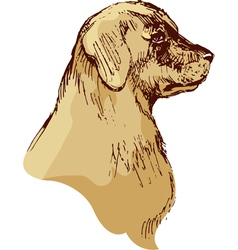 Dog head - bloodhound hand drawn - sketch vector