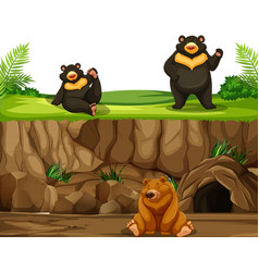 bear in nature vector image