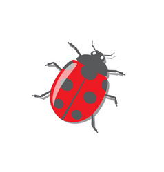 Red ladybug with shadow vector