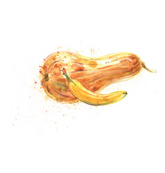banana and squash pumpkin watercolor vector image