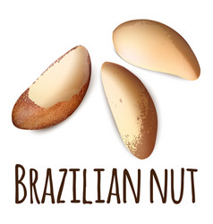 brazilian nut icon realistic style vector image