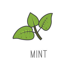 Mint line cooking isolated vector