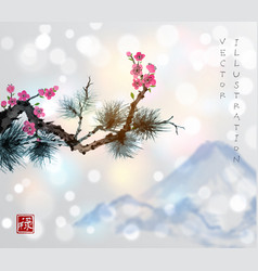 Pine tree branch and sakura in blossom vector