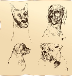 Set of Dogs heads - dalmatian bloodhound bulldog h vector
