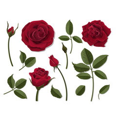 Set of red rose flower parts vector
