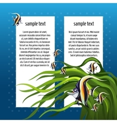 Angelfish among algae with white card for text vector