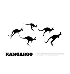 black silhouettes of jumping kangaroos vector image