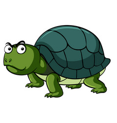green turtle with serious face vector image