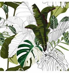 tropical bamamas monstera leaves vector image