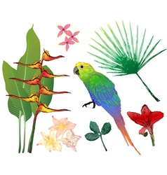 tropical elements for your design vector image vector image