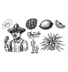 agave fruits lemon and cactus farmer in a hat vector image