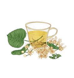Elegant drawing of tea in glass cup linden vector