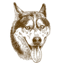 Engraving drawing of husky dog head vector