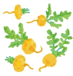 Set Turnip Hand drawn painting on white vector image