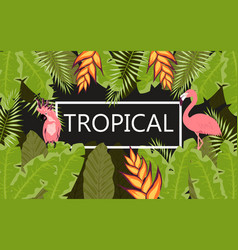 flamingo tropical banner vector image