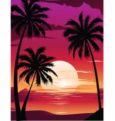Sunset with palm vector