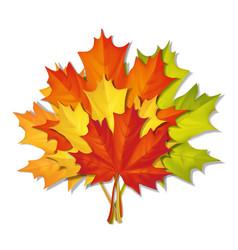 Bouquet autumn leaves vector
