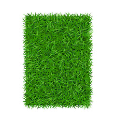 green grass background 3d isolated on white lawn vector image
