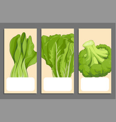 green vegetables cards vector image