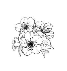 hand drawn design elements sakura flowers vector image