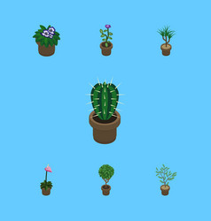 Isometric flower set of fern grower flowerpot vector