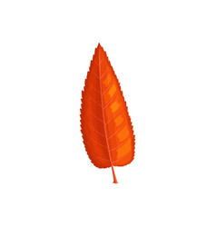 Leaf autumn tree fall red foliage ash or elm vector