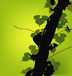 Vine Growing On A Tree vector image