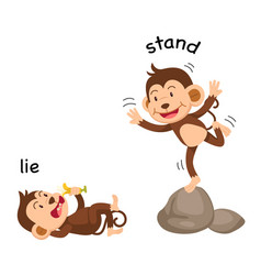 opposite words lie and stand vector image vector image