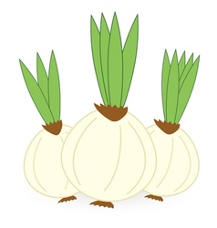 onion isolated on white background vector image vector image
