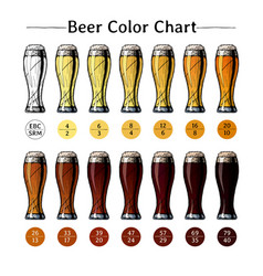beer color chart vector image
