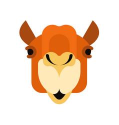 Camel face front head animal uae beast desert vector